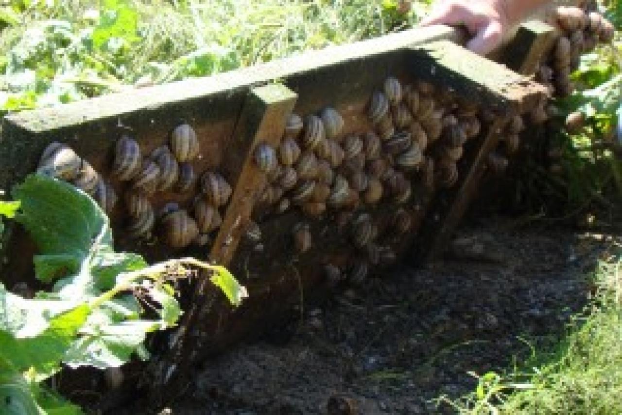Zdjęcie główne #12 - Hodowla ślimaka jadalnego - pomysł na biznes.
