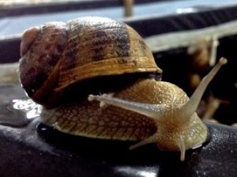 Zdjęcie główne #20 - Dobroczynny śluz ślimaka!!!