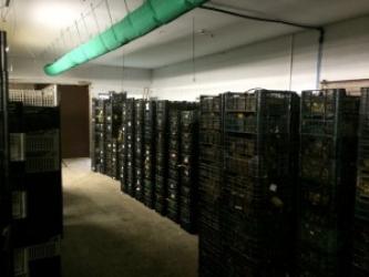 Zdjęcie główne #30 - Polish Snail Holding skupił wszystkie zakontraktowane ślimaki