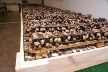 Zdjęcie główne #41 - Hodowla ślimaków. Dobry biznes dla rolników