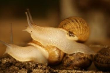 Zdjęcie główne #48 - Duże straty w rolnictwie. Odbiło się to również na hodowli ślimaków