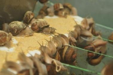 Zdjęcie główne #174 - Strona o hodowli ślimaków