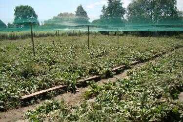 Zdjęcie główne #179 - Modelowy przykład franszyzy spółki PSH. O hodowli ślimaków w telewizji TVS