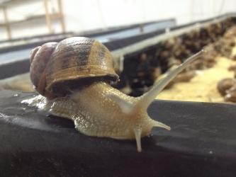 Zdjęcie główne #194 - Chcesz zarabiać na hodowli ślimaków? Weź udział w szkoleniu