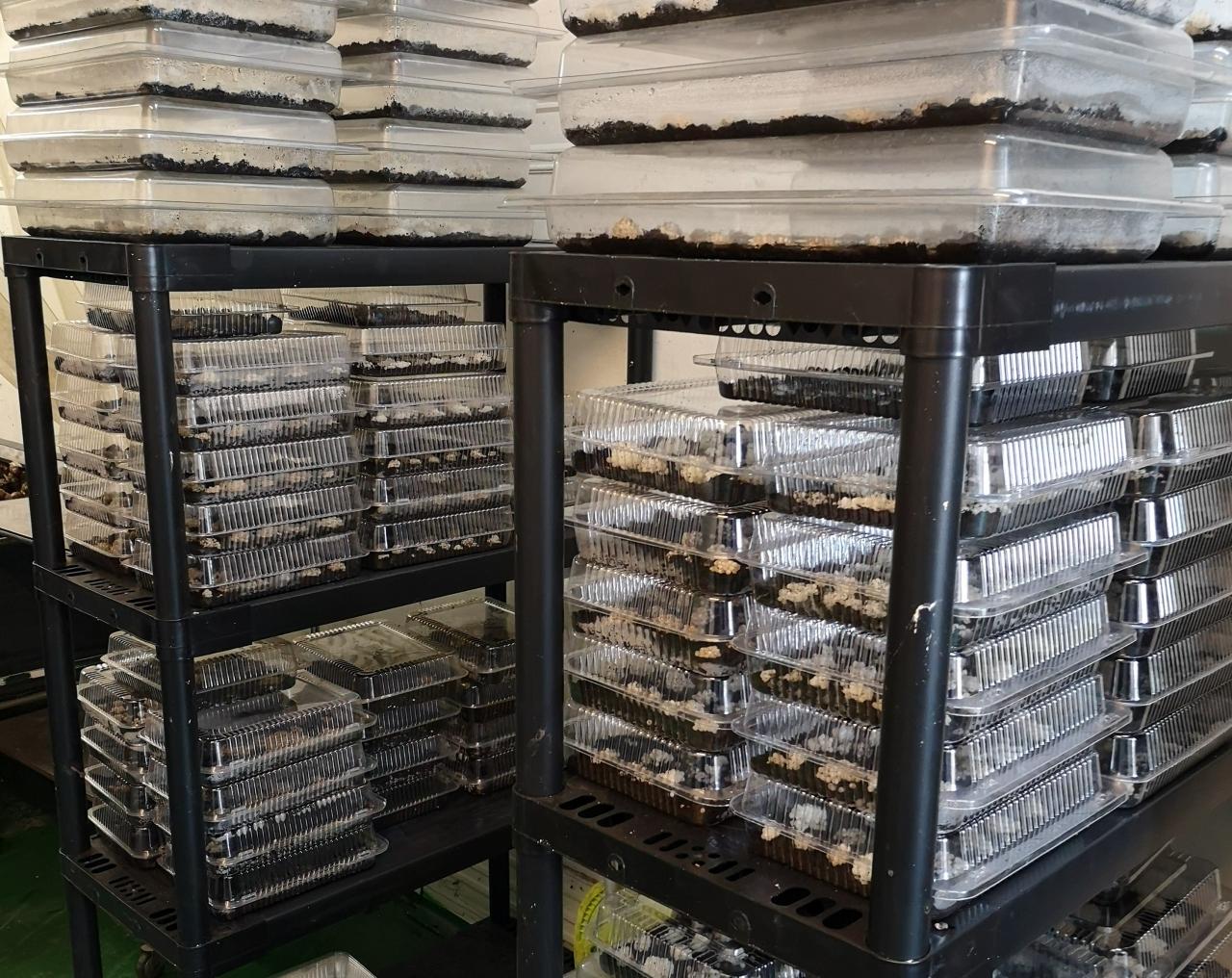 Zdjęcie główne #200 - Zapowiada się dobry sezon w hodowli ślimaków.