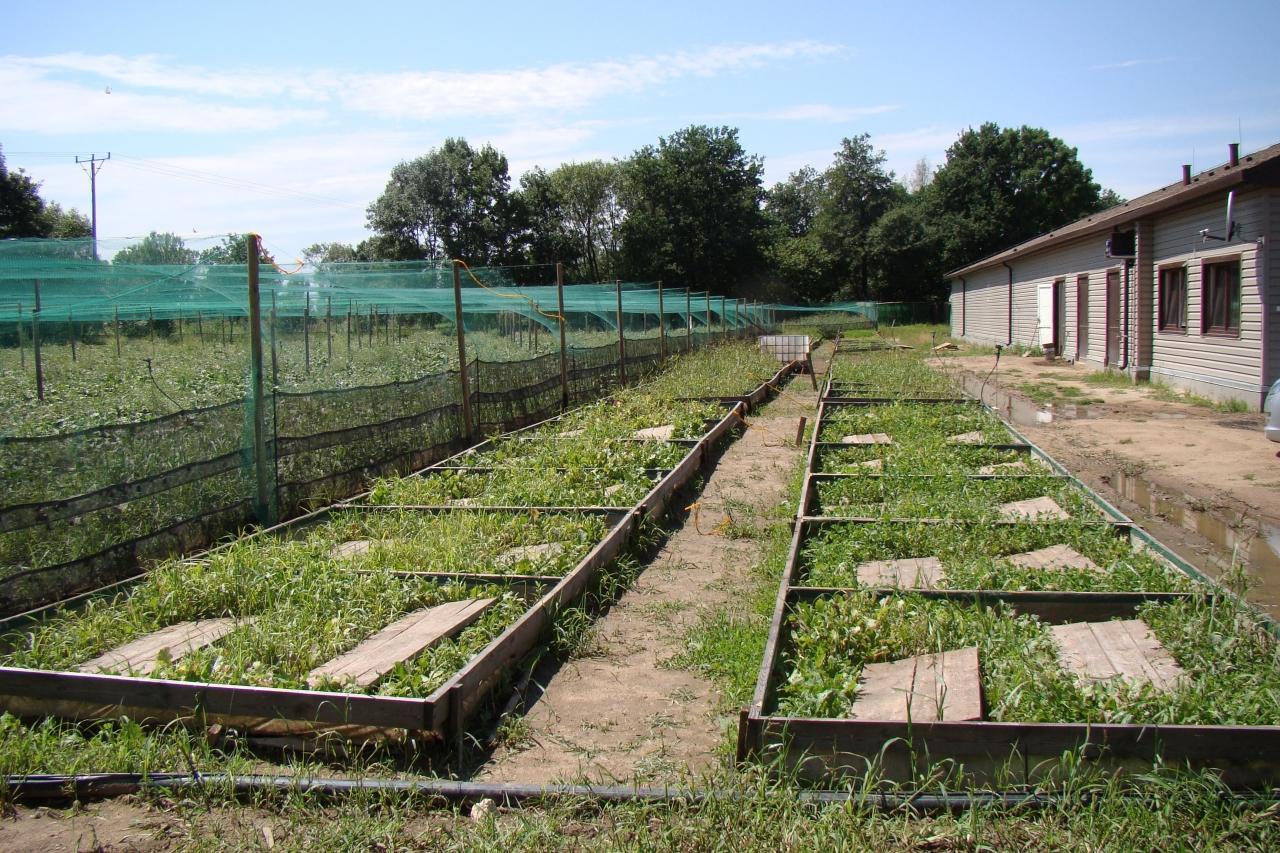 Zdjęcie główne #202 - PSH rozwija sieć partnerskich hodowli wzorcowych.