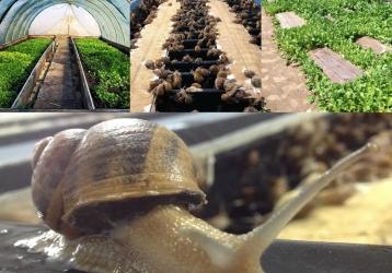 """Zdjęcie główne #204 - Dni otwarte PSH. Zobacz hodowlę ślimaków """"od kuchni"""""""