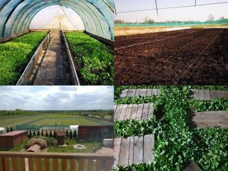 Zdjęcie główne #212 - 5 korzyści współpracy z Polish Snail Holding