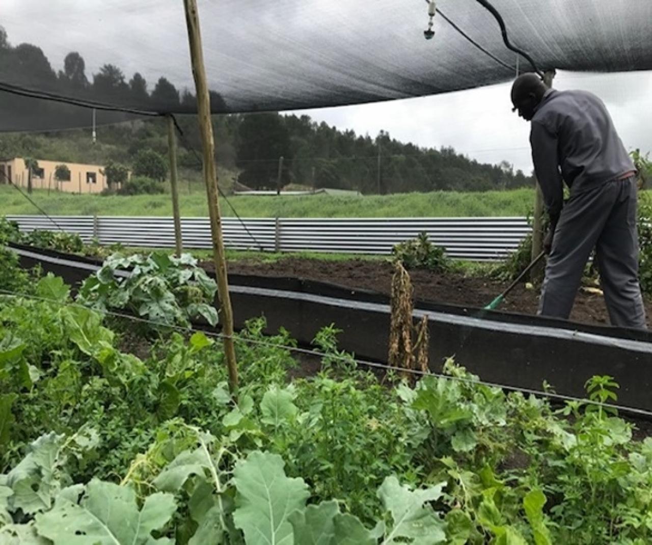 Zdjęcie główne #237 - Technologia hodowli ślimaków PSH pomogła uruchomić farmy w RPA