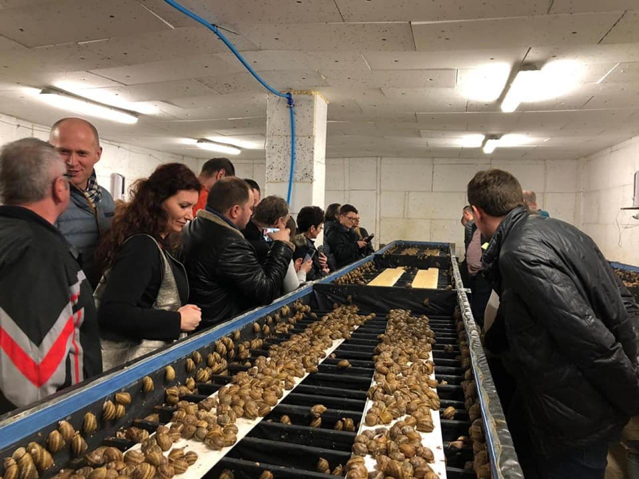 Zdjęcie główne #239 - Chcesz hodować ślimaki? Możesz sięgnąć po środki unijne