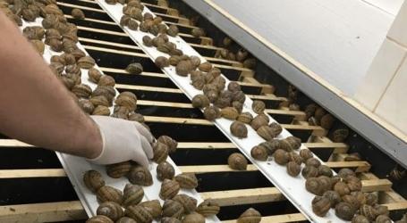 Zdjęcie główne #241 - Jak rozpocząć hodowlę ślimaków? Postaw na szkolenia z PSH