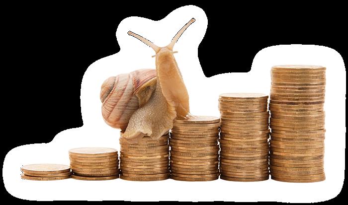 Zdjęcie główne #1063 - Polish Snail Holding